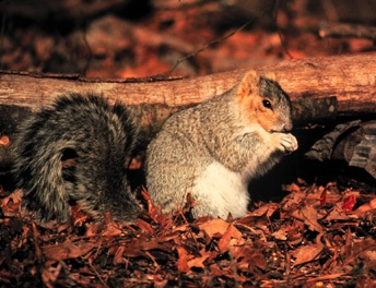 Unsharp squirrel image